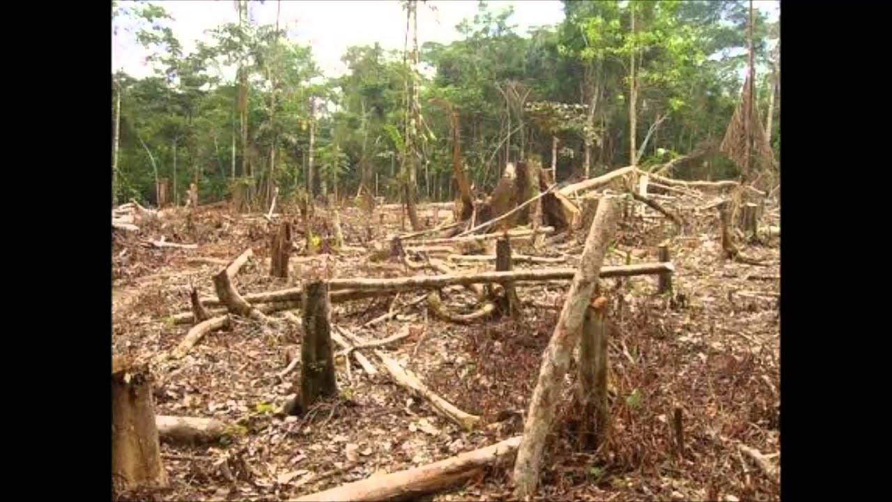 Causas de la perdida biodiversidad yahoo dating 6