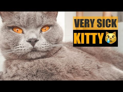 EMERGENCY VET VISIT - CAT FOAMING AT THE MOUTH! | CHRIS & EVE