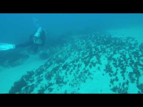 2017 05 28 Gordon's Bay - Sydney - Dive 2 (RAW)