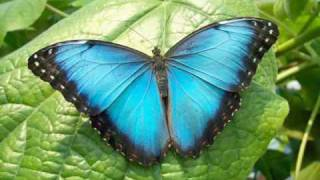 Butterfly Dance - Yanni