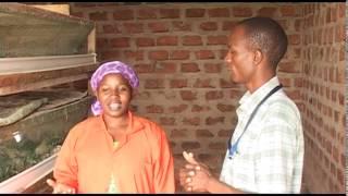 SMART FARMING QUAILS/UGANDA