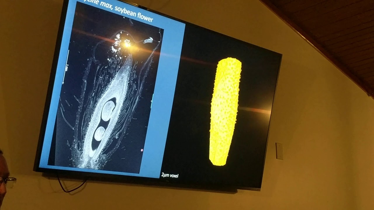 3D X-ray plant imaging by Danforth plant science center part3 #MedicalRadiology