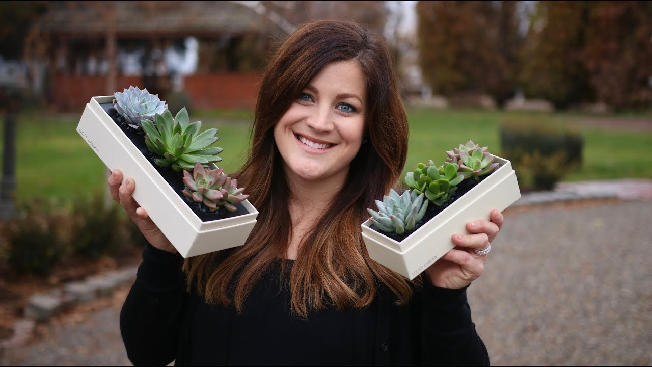 succulent-gift-boxes-giveaway-garden-answer