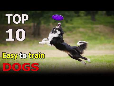 TOP 10 EASIEST  TO TRAIN DOG BREEDS | Top 10 animals