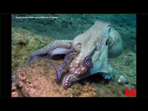 Octopus Brains [UNCUT, 30-MINUTE VERSION]