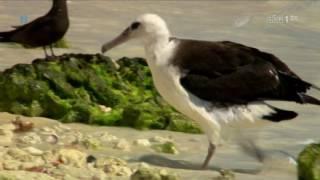 Dzikie Hawaje - Tajemnice głębin (2/2) [film dokumentalny, lektor PL]