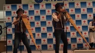 ティエラブランカ「プルルナス」@中村日赤ふれ愛祭り2016.11.19