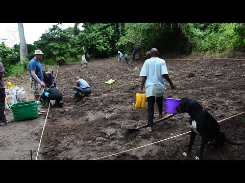 So wird der Wein in Kongo angebaut
