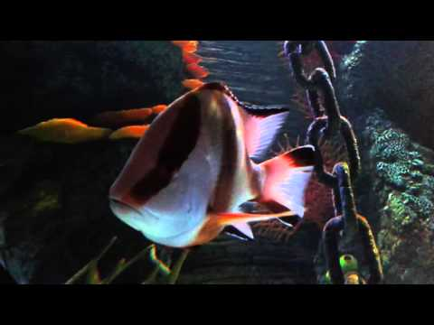 Aquarium Istanbul Forum Part 4