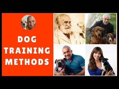Dog training methods compared with play and praise dog training method