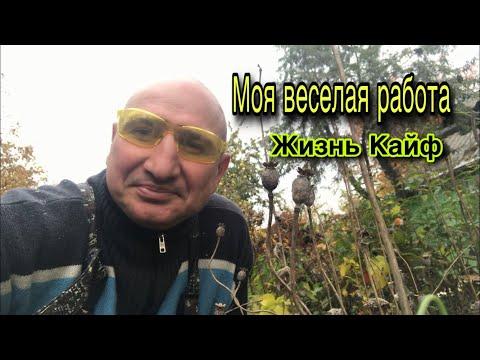 МОЯ ВЕСЕЛАЯ РАБОТА  //ЖИЗНЬ В КАЙФ 👍