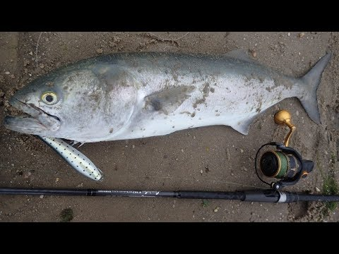 Topwater Bluefish Fun And New Surf Rod Review