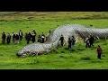 Documentary AMAZON Jungle Predators WILD ANIMALS – Anaconda Snake, Jaguar, Piranha Fish - Das Pro