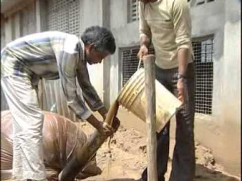 Holy Cow Gau Maata गौ माता Vigyan Kendra - Jaipur