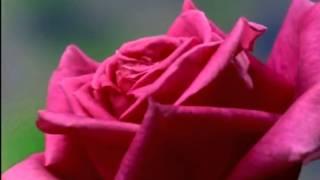 Des 39 Ree indigo daisies from Supernatural.mp3