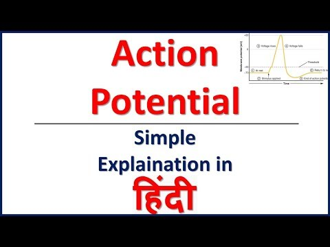 Action potential and resting potential neuron (in Hindi ) | Bhushan Science
