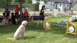 Соревнования собак на канадском фермерском рынке