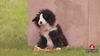 Perro de peluche ataca a perros reales! (Broma)