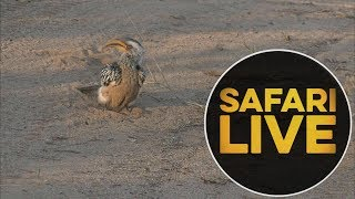 safariLIVE - Sunrise Safari - 2018, 16. June
