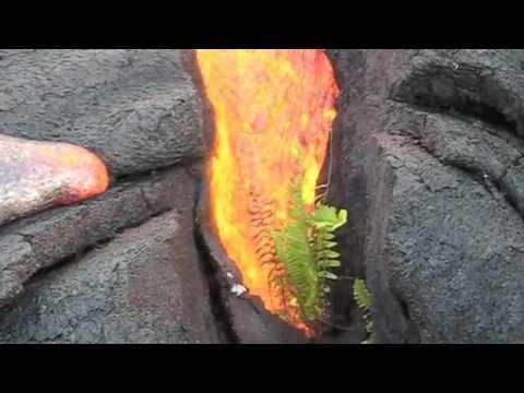Lava vs Plant - Big Island, Hawaii