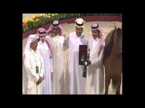 24th Qatar International Arabian Horse Show - Day 2