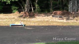 Alpha Dog Training Ga - Maya