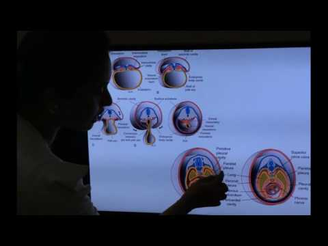 Embryology of Respiratory System -Part  II by Dr Vijaya