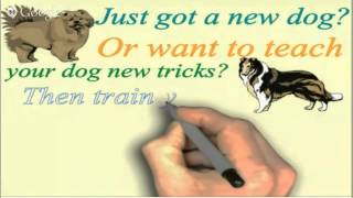 Online Dog Or Puppy Training For Your Cocker Spaniel