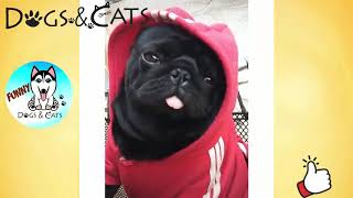 Dog Love Cute And Funny Videos   Try Not To Laugh Funny Dogs   YouTube
