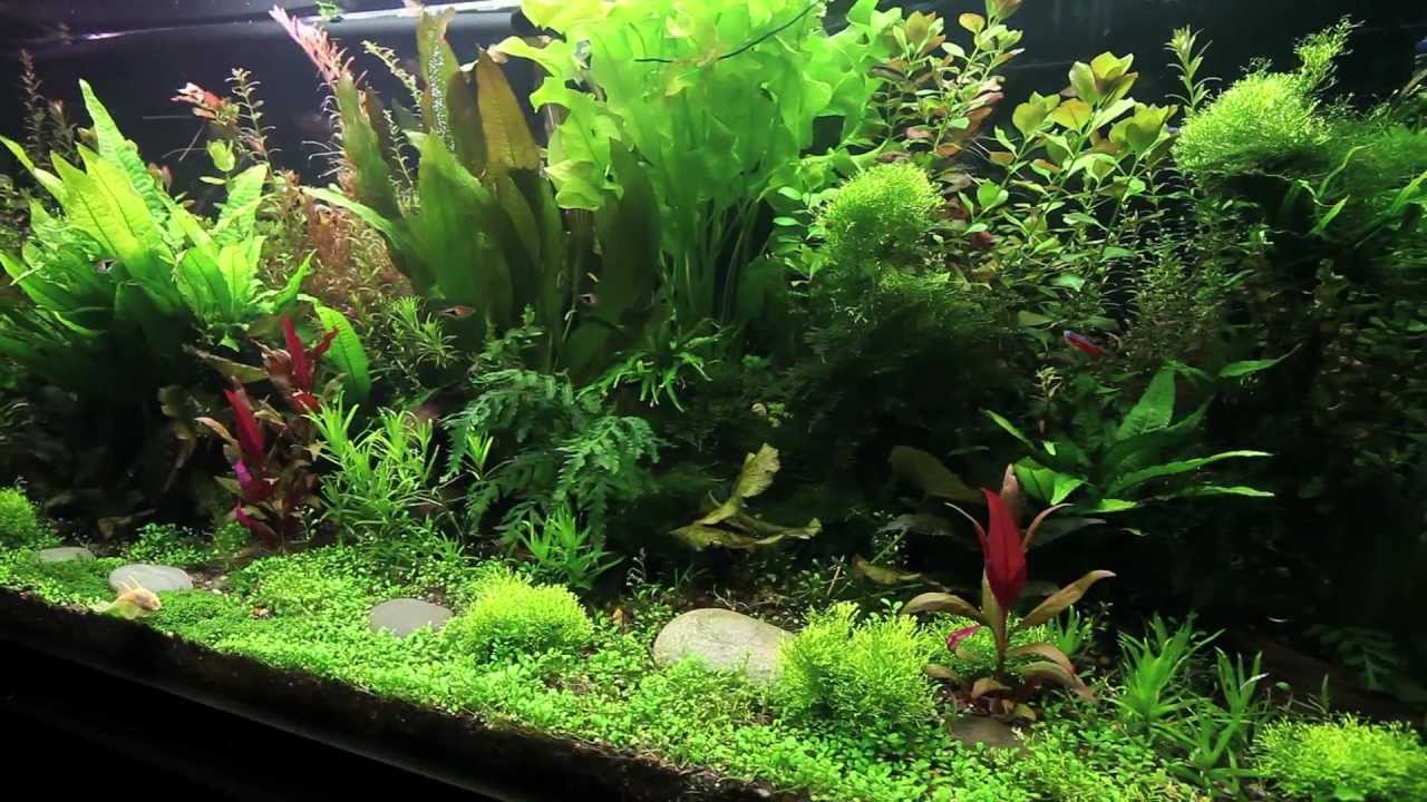 Big planted youtube for Where can i buy fish