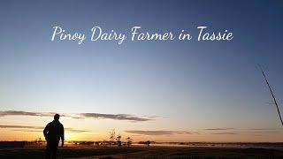 Full Milking Routine, Dairy Farming in Australia [ Gatasan sa Australia ] | PinoyDairyFarmer