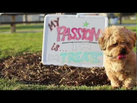 PASSION FEST II Opening Video (2012)