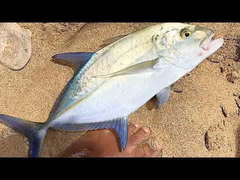 Fishing With Live Oama - Shore Fishing - Hawaii