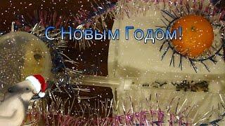 Новогоднее поздравление от MuravEda