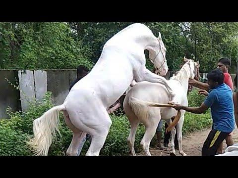 Sex pics horse Horse Porn