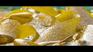 Lush Cosmetics | Meet Our Seaweed Supplier: Part 1