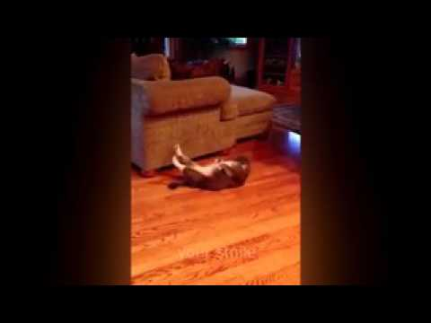 Funny cats videos 2