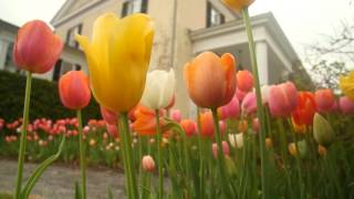 Spring Gardening Quick Tips: Care