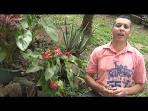 CHILITA QUERIDA - Germán Cárdenas