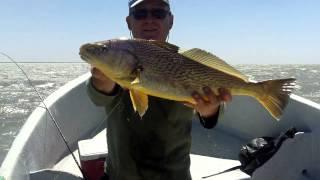 Pesca Embarcado en Los Pocitos 5 de Febrero de 2014