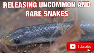 RELEASING SOME RARE SOUTH AFRICAN SNAKES!!