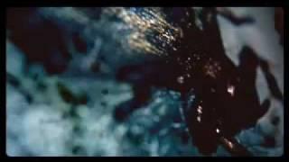 "Tom Waits - ""Army Ants"""