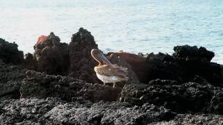 Galapagos Cruises Tours | Metropolitan Touring