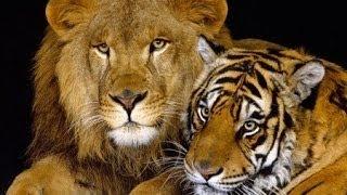 20 животных которые смогут вас убить без труда - NAT GEO WILD