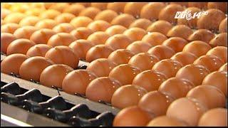 (VTC14)_Sản xuất trứng gà sạch nhờ nông nghiệp công nghệ cao