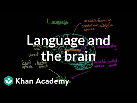 Language and the brain: Aphasia and split-brain patients | M