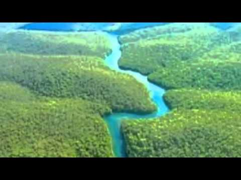 Tim and Leo's Rainforest weather forecast - YouTube