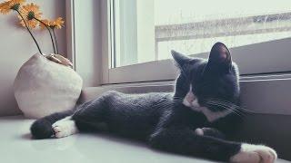 RESCUING A KITTEN - Melissa The Cat