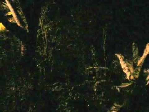 Night-time in Jayuya, Puerto Rico and the sounds of the Coqui