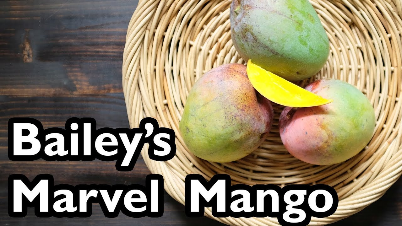 Truly Tropical Mango Varieties Baileys Marvel Youtube